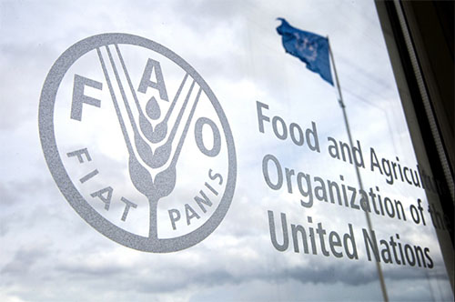 2021 World Food Day: Over 4 million Nigerians hungry, malnourished, 1,500 Nigerians die of rabies yearly, FAO